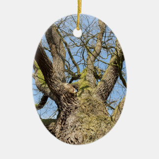 Bottom view oak tree without leaves in winter ceramic ornament