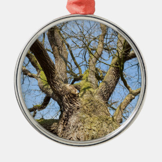 Bottom view oak tree without leaves in winter metal ornament