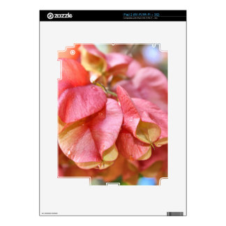 Bougainvilla Pink Gold Seed Pods iPad 2 Decal