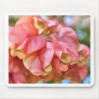 Bougainvilla Pink Gold Seed Pods Mouse Pad