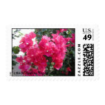 BOUGAINVILLA POSTAGE STAMP