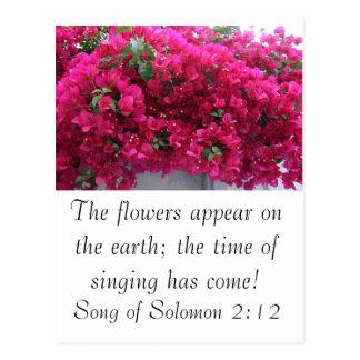 Bougainvilla - Scripture: Song of Solomon 2:12 Postcard
