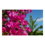 Bougainvillea and Palm Tree Print