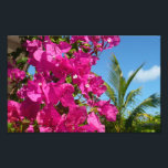 "Bougainvillea and Palm Tree Tropical Nature Scene Photo Print<br><div class=""desc"">At Half Moon Cay in the Bahamas,  there is some beautiful tropical scenery. Here is a magenta bougainvillea vine next to a palm tree.  Check out our store for more photos of colorful tropical flowers.  This picture is also featured as the widescreen wallpaper &quot;Bougainvillea and Palm Tree&quot; from MLeWallpapers.com.</div>"