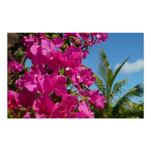 Bougainvillea and Palm Tree Tropical Nature Scene Poster