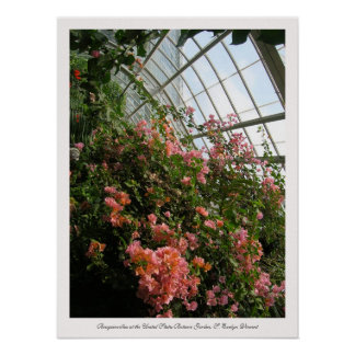 Bougainvillea at the United States Botanic Garden Poster
