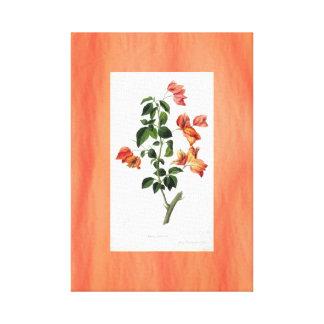 Bougainvillea Botanical Vintage Art Canvas Orange