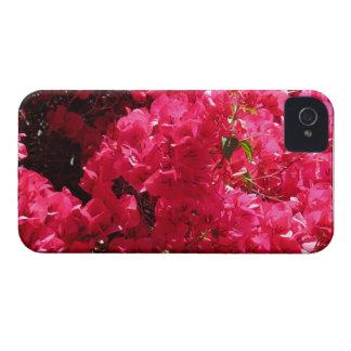 Bougainvillea Blackberry Case