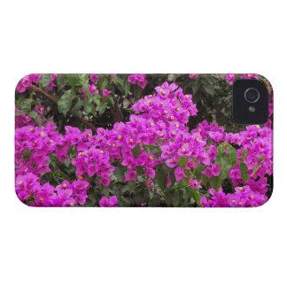 Bougainvillea Blackberry Cases