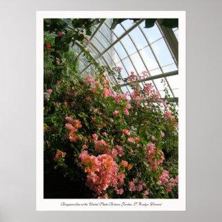 Bougainvillea en el jardín botánico de Estados Uni Poster