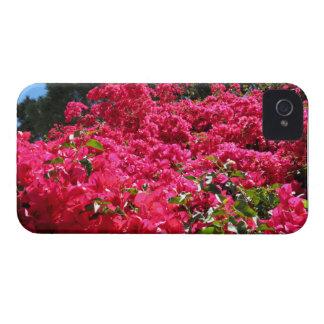 Bougainvillea Field Blackberry Bold Case