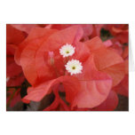 Bougainvillea Flowers Greeting Cards