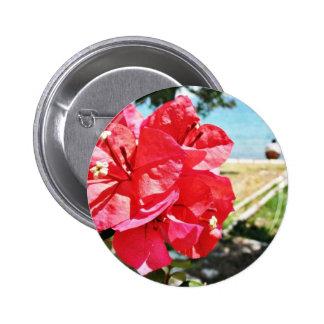 Bougainvillea Glabra alias una flor de papel en Gr Pins