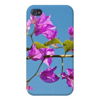 Bougainvillea iPhone 4 Cover