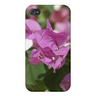 Bougainvillea Covers For iPhone 4
