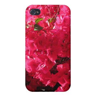 Bougainvillea iPhone 4 Cases