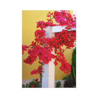 Bougainvillea red flowering at Pergola, timber bea Canvas Print