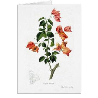 Bougainvillea Spectabilis Greeting Card