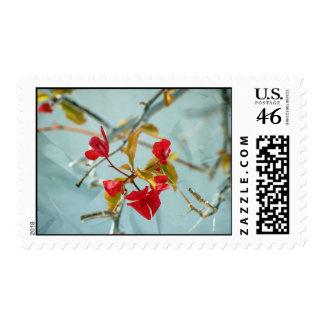 Bougainvillea stamp