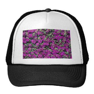 Bougainvillea wall flower  flowers trucker hat