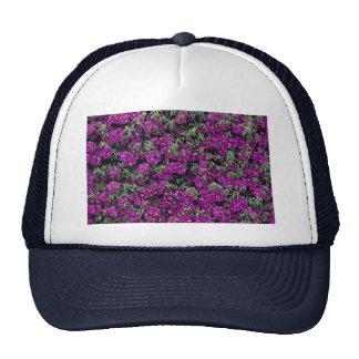 Bougainvillea wall flower trucker hat