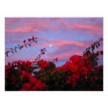 Bougainvilleas and Full Moon at Sunset Print