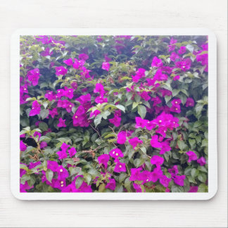 Bougainvilleas Mouse Pad
