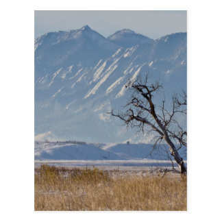 Boulder Colorado Snowy Front Range View.jpg Postcard