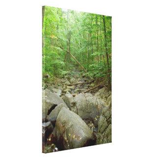 Boulder creek forest Stretched Canvas Print