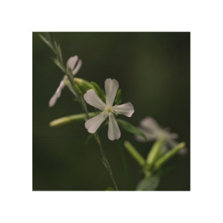 Bouncing Bet White Wildflower Floral Wood Wall Art