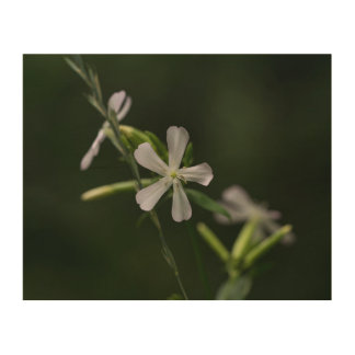 Bouncing Bet White Wildflower Wood Wall Art