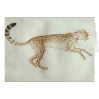 Bounding cheetah with a red collar card