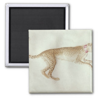 Bounding cheetah with a red collar magnet