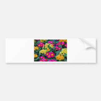 Bountiful Beauty Bumper Sticker