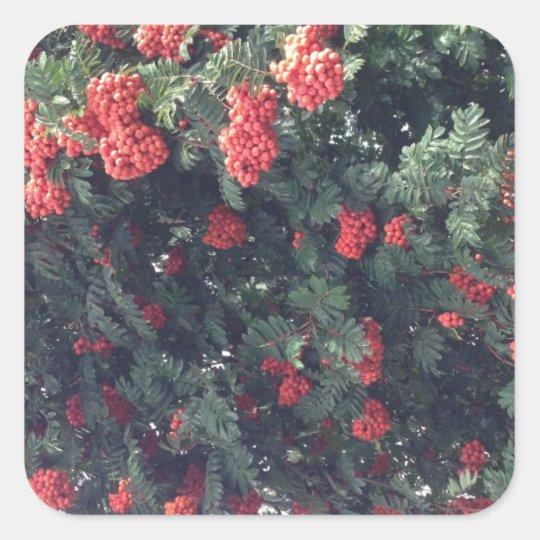 Bountiful Berries Square Sticker