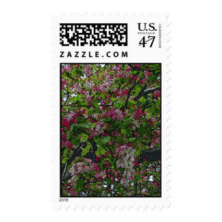 Bountiful Colors of Spring Postage