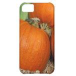 Bountiful Fall Harvest Orange Pumpkins and Corn iPhone 5C Case