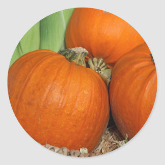 Bountiful Fall Harvest Orange Pumpkins and Corn Classic Round Sticker