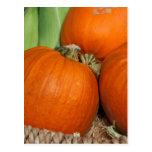 Bountiful Fall Harvest Orange Pumpkins and Corn Postcard