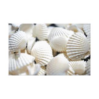 Bounty of Shells Canvas Print