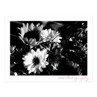 Bouquet  black and white  photography postcard