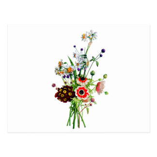 Bouquet of Anemone Auricula & Narcissis by Prevost Postcard
