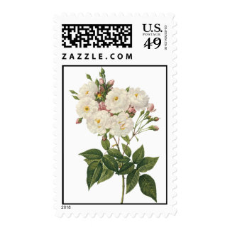 Bouquet of Beautiful White Roses Postage