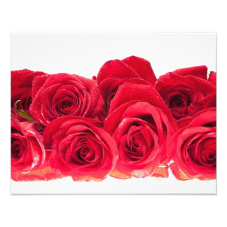 Bouquet of Bright Pink Roses Art Photo