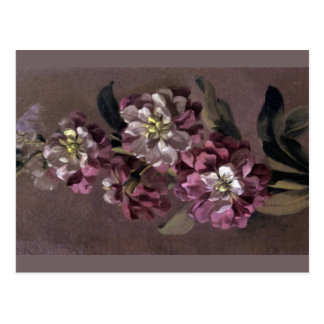 Bouquet of Gilly Flowers Postcard