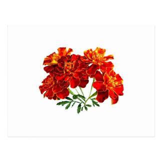 Bouquet of Marigolds Postcard