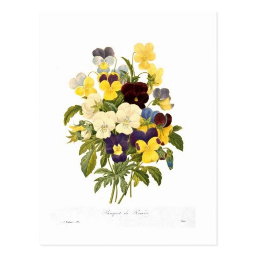 Bouquet of pansies by Pierre-Joseph Redouté Post Cards