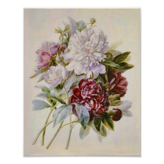 Bouquet of Peonies by Pierre Redoute Poster