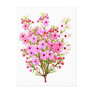 Bouquet of Pink Waxflowers Wrapped Canvas