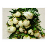 Bouquet of White Buds Postcard